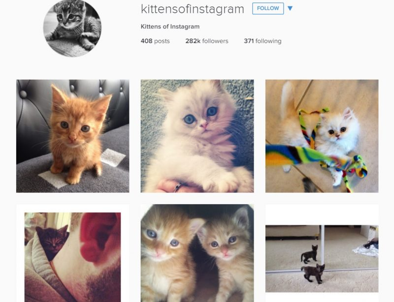 Instagram accounts for cat lovers
