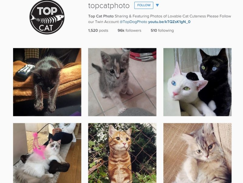 Instagram account for cat lovers