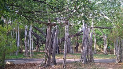 Divorced dating in chennai tree